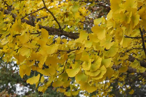 Image of autumnal leaves